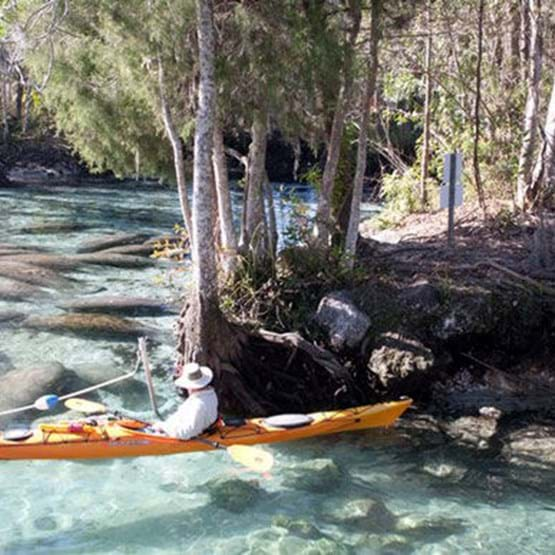 Kayakers in Three Sisters Springs
