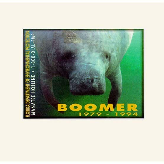 "1995-1996 ""Boomer"" decal by Tracy L. Nichols."