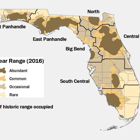 2016 Florida Black Bear Range Map