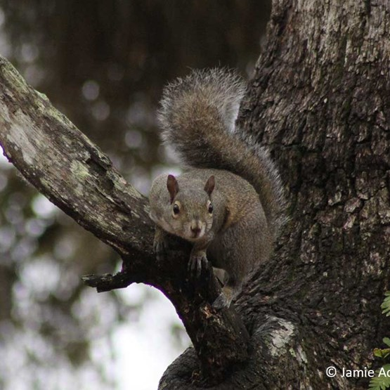 Squirrel on a tree branch - Photo by Jamie Adams