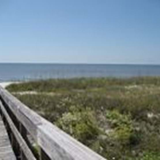 View of a wooden boardwalk and coastal vegetation on Alligator Point, Florida