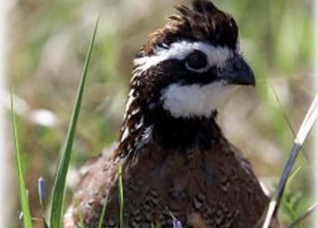 Florida Upland Hunting