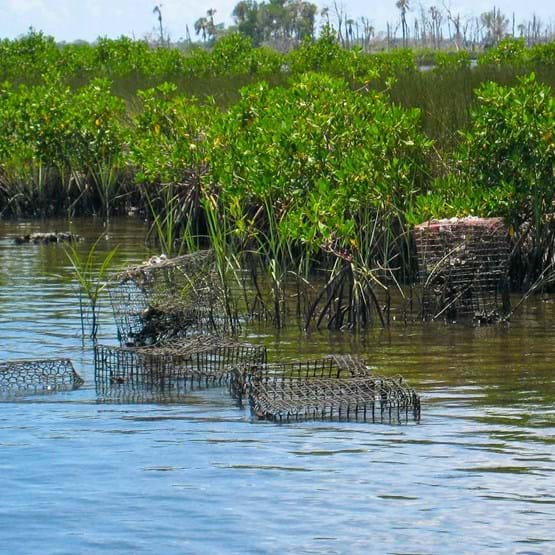 Crab traps floating in the Crystal River