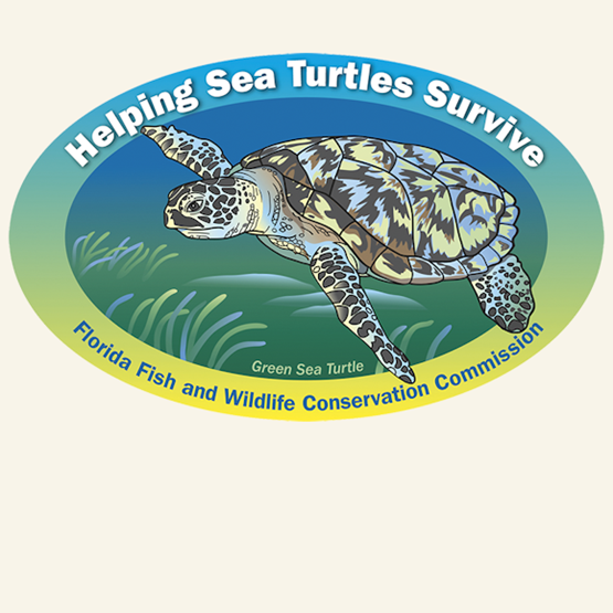 "2017-2018 ""Green Sea Turtle"" decal by Lizabeth West, FWC."