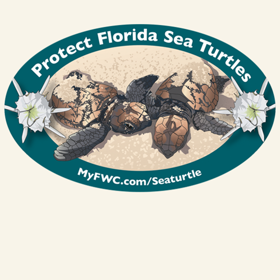 "2016-2017 ""Hawksbill Sea Turtle hatchlings"" decal by Ann Marie Tavares, FWC."