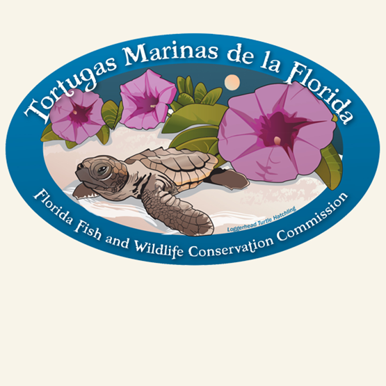 "2013-2014 ""Loggerhead turtle hatchling"" decal by Ann Marie Tavares, FWC."