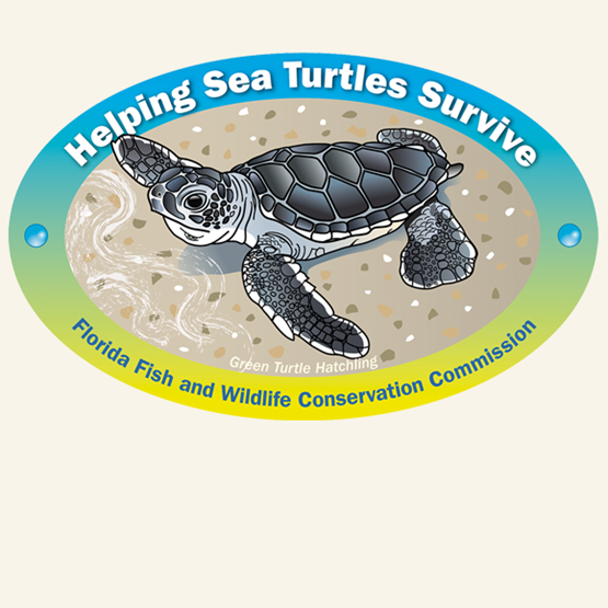 "2012-2013 ""Green sea turtle"" decal by Lizabeth West."