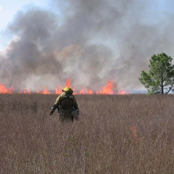Firefighter Lighting Prescribed Burn in Grass