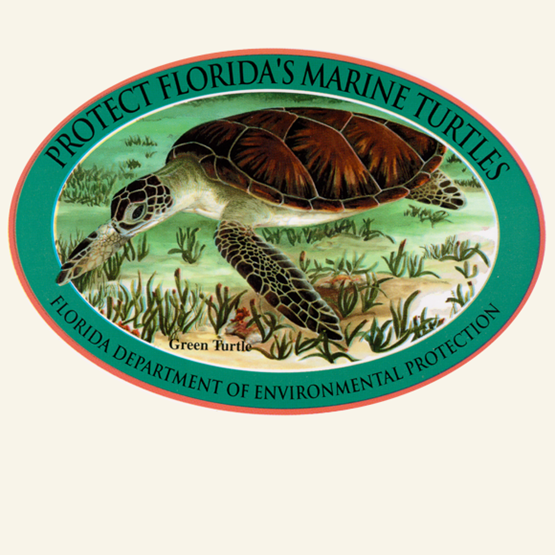 "1997-1998 ""Green Sea Turtles"" by Michelle G. Pasquin."