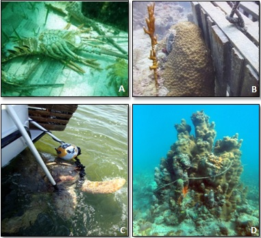 examples of impacts of lost lobster traps