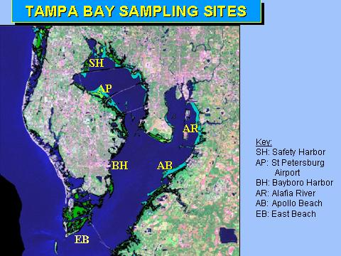 Map of Tampa Bay blue crab health study sampling locations