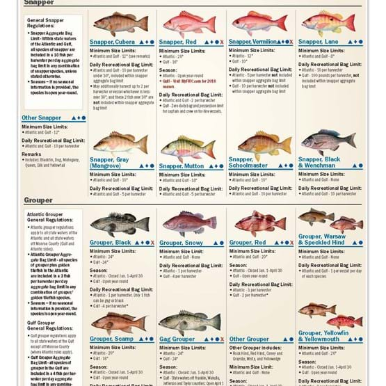 Florida recreational saltwater fishing regulation chart