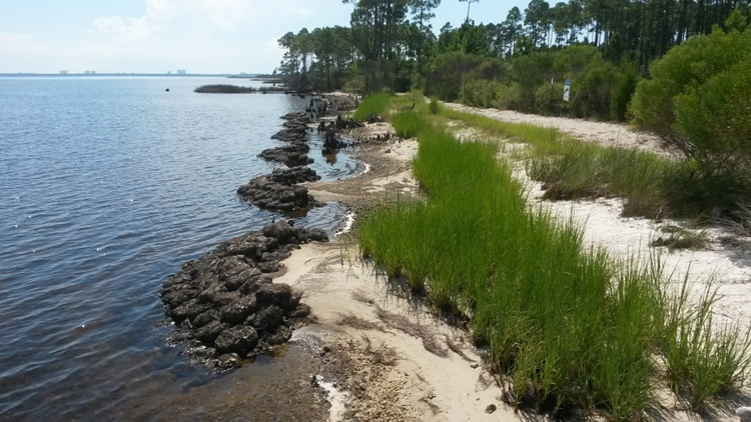 Living shoreline in Panama City