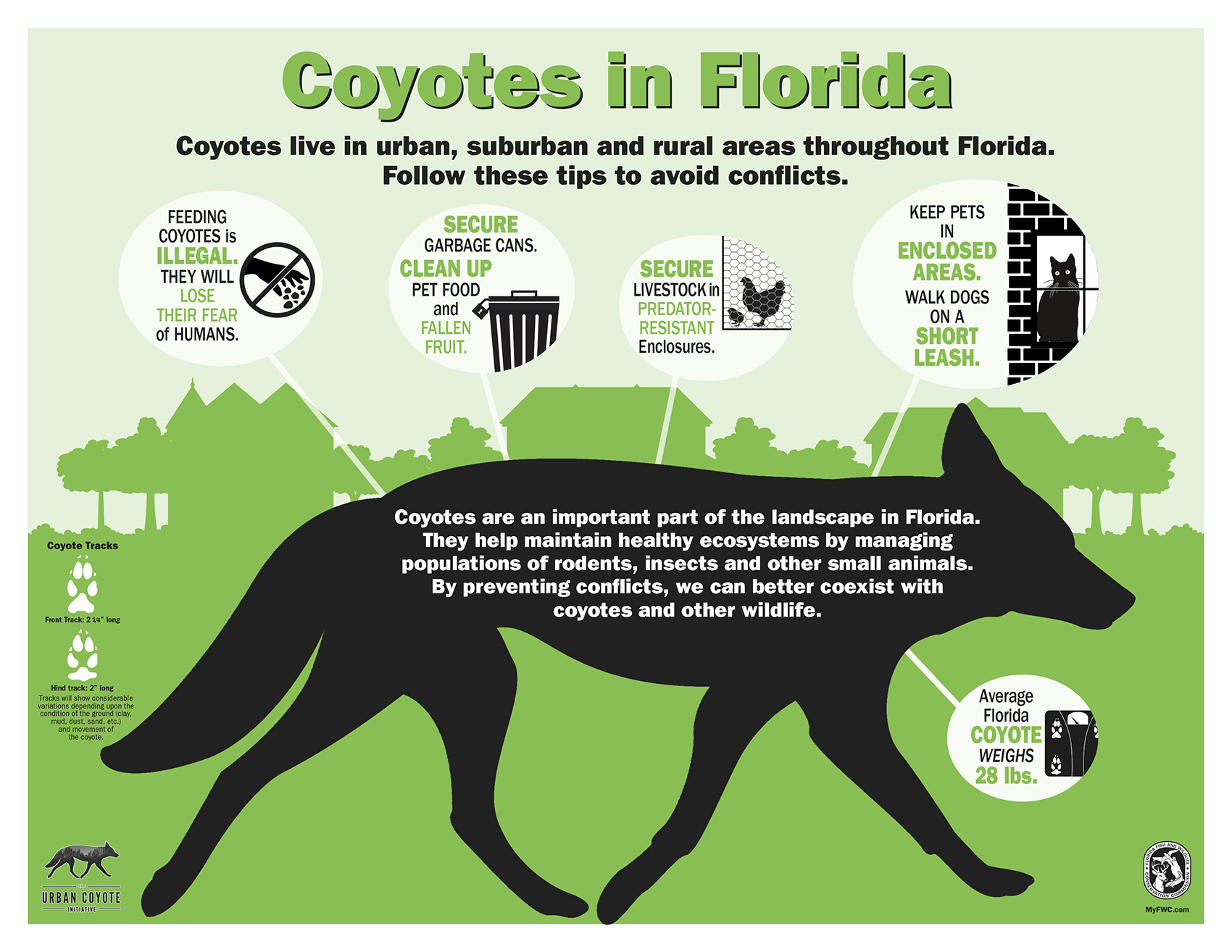 Coyotes in Florida Poster