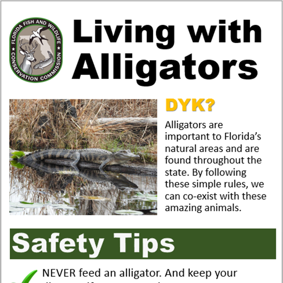 Living with Alligators poster