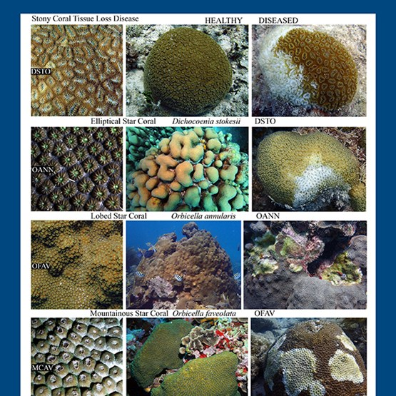 Collection of images showing healthy and diseased coral