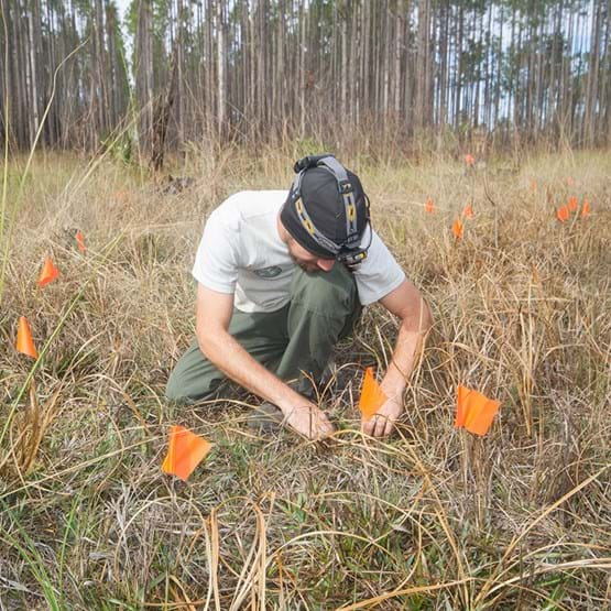 a man searches through grass looking for salamander eggs