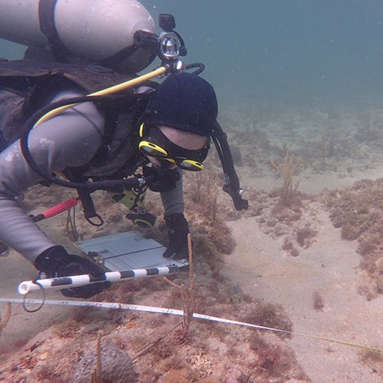 a diver measures coral underwater