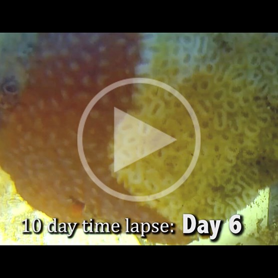 screenshot from video showing time lapse of coral disease progression
