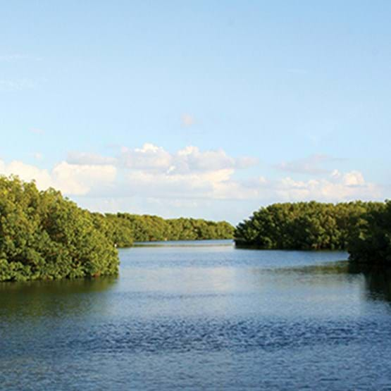 mangroves and waterway