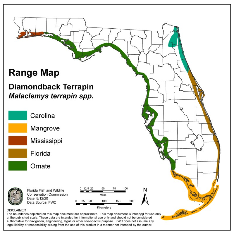 Range map for the five Florida subspecies of diamondback terrapin. It shows that these turtles live along Florida's coasts. The Carolina subspecies is found on the Northeastern coast. The Florida subspecies is found on the east coast, from Volusia County to northern Monroe County. The mangrove subspecies is found in South Florida and the Keys. The ornate subspecies is found on the west coast and in the Panhandle. The Mississippi subspecies is found in the far western Panhandle.