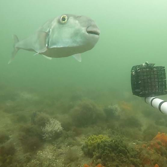 underwater view of fish and camera