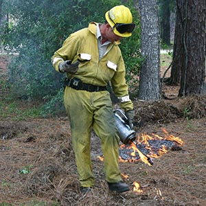 FWC biologist starting a prescribed fire using a drip torch