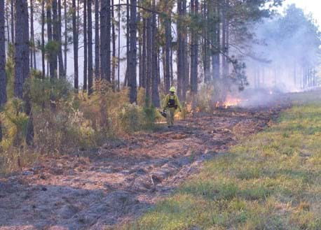 A biologist starts a slow-moving prescribed burn along a freshly plowed fire line.