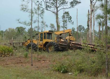 Roller chopping improves habitat by removing dense undergrowth.