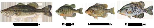 Popular Sport Fish Species
